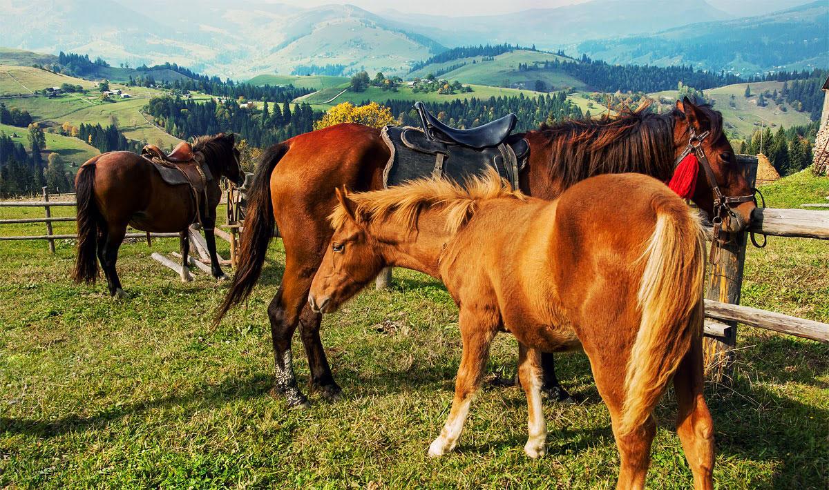Катання на конях в селі Дземброня
